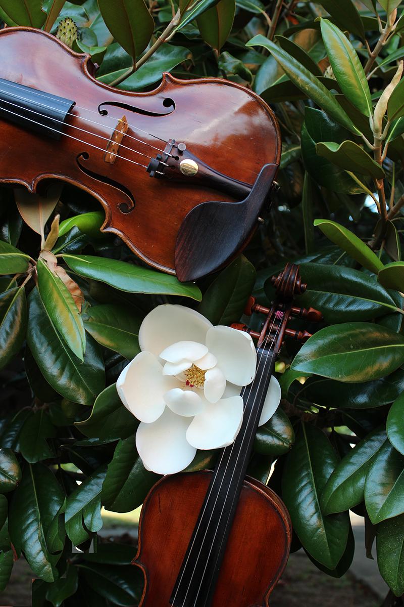 2 Violins with magnolias - Jolie Deux RVA Violin Duo